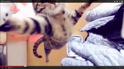 世界猫伝説.png